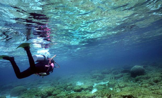 Nurkowanie na wyspie Utila / shutterstock