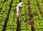 Jak rozpoznać ekologiczną żywność. Czym się różni bio od organic?