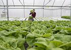 Nowalijki, mrożonki czy z importu - które owoce i warzywa teraz jadać?