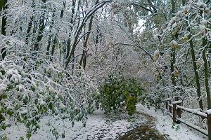 Pierwsze ofiary zimy. Cz�� Mazowsza wci�� bez pr�du