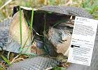 Na widok węża dębiejesz? Lasy Państwowe tłumaczą jak rozpoznać niegroźny gatunek