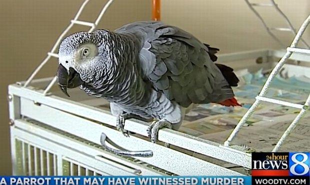 Papuga by�a �wiadkiem morderstwa. Rodzina uwa�a, �e ptak powtarza ostatnie s�owa ofiary