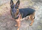 Pies czuwał przy swoim panu do końca. Beta odnaleziona po tygodniu