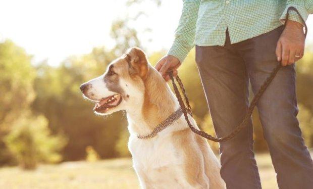 Dogoterapia, czyli terapia z udzia�em psa. Na czym polega?