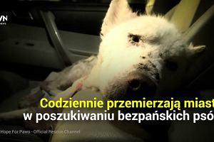 Dzięki nim setki psów znalazły nowy dom. To małżeństwo opiekuje się porzuconymi zwierzakami