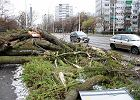 Bilans huraganu. Cztery osoby nie �yj�, 400 tys. gospodarstw bez pr�du, odwo�ane loty, zamkni�te szko�y