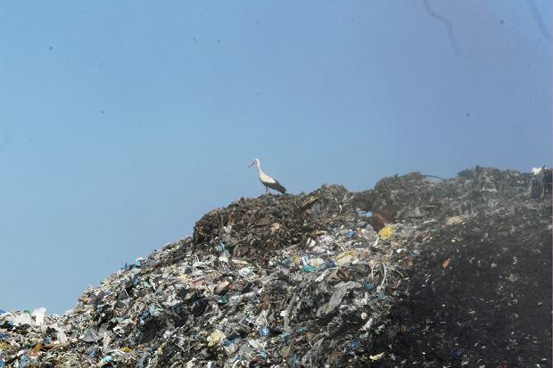 Zdjęcie numer 2 w galerii - Co roku do Polski trafia o 100 tysięcy ton więcej śmieci. M.in. z Nigerii i Australii