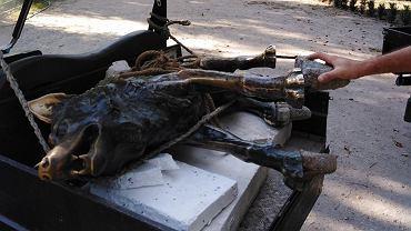 Zdemontowana rzeźba wilka