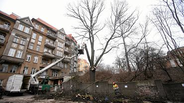 Efekt Szyszki - Polska w trocinach... Wycinka dorodnych drzew w centrum Szczecina