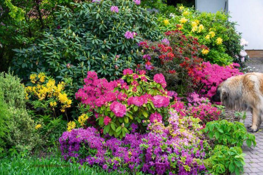Które kwiaty sadzimy jesienią?