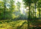 Jak się nie zgubić w lesie? Poradnik na majówkę dla mieszczan