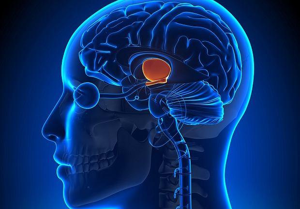 Somatostatyna wydzielana jest między innymi przez podwzgórze