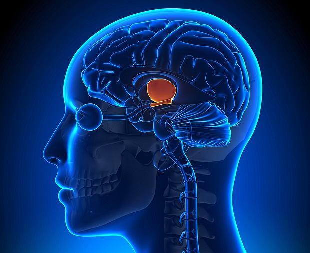Somatostatyna - przeciwnik hormonu wzrostu. Gdzie wydzielana jest somatostatyna i jakie są jej funkcje?