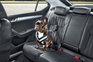 Skoda | Pasy bezpiecze�stwa dla ps�w
