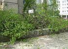 """Wycinają drzewa na łódzkim Manhattanie. Protest mieszkańców: """"To ostatnia oaza zieleni"""""""
