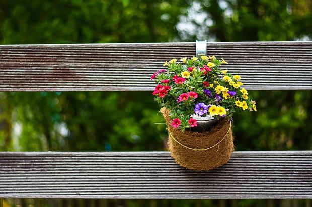 Jak udekorować duży i mały ogród? Wystarczy znać kilka zasad