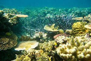 Naukowcy ogłosili śmierć Wielkiej Rafy Koralowej
