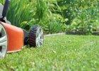 Twój trawnik nie ro�nie? Sprawd�, jaki pope�niasz b��d