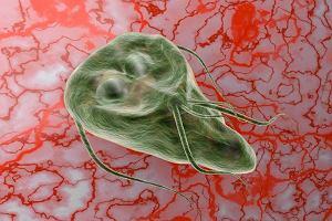 Giardia lamblia - zakażenie, objawy, leczenie