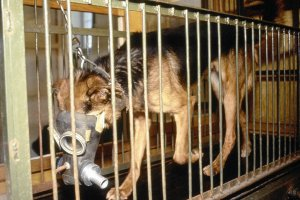 Pieskie �ycie nowej ustawy o do�wiadczeniach na zwierz�tach