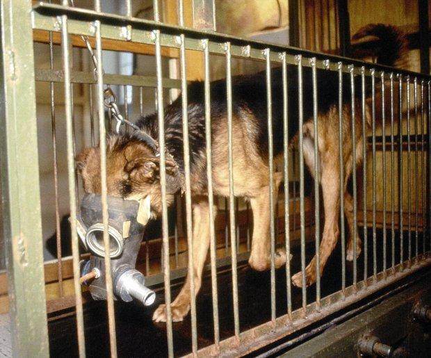 Obro�cy zwierz�t przeciwko nowej ustawie o do�wiadczeniach na zwierz�tach
