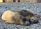 Wielorybów, cholera, zachciało się mi [Korespondencja z Antarktyki]