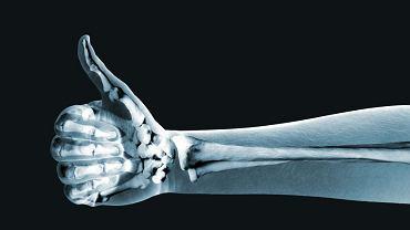Człowiek ma aż 206 kości