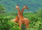 Kenia wycieczka - najwi�ksze atrakcje