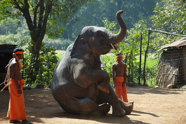 Indie wycieczka - planowanie podróży i informacje praktyczne