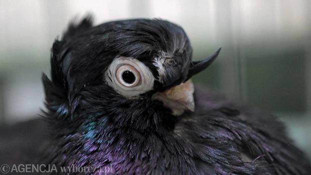 Zdj�cie numer 1 w galerii - Wystawa ozdobnych ptak�w. Zobacz galeri� zdj��