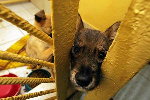 Sposób na bezdomność zwierząt w gminach? Zabijanie