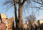 65 lat min�o, czyli jak budowa�a si� uczelnia [FOTO]