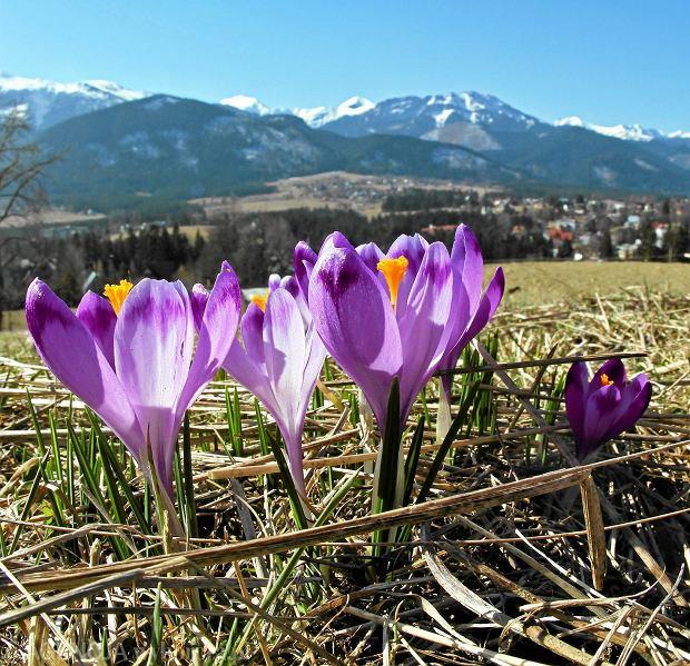 Zdjęcie numer 1 w galerii - Wiosna w Polskich Tatrach