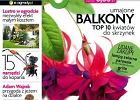"""Startuje """"Magnolia"""" - nowy miesięcznik dla miłośników roślin i ogrodów"""