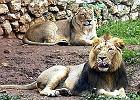 Za�o�y� zoo w... ogr�dku