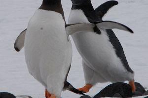 Antarktyda da się lubić
