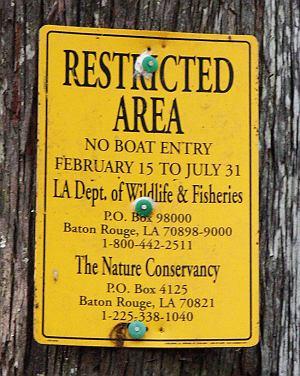Aligatory, USA, Floryda