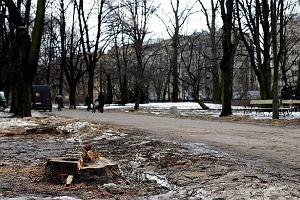 Tn� drzewa w Skaryszaku. Ale na Euro remontu nie b�dzie