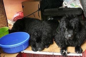 Warszawa: Hodowcy zostawili psy w samochodzie. Jeden zdech�