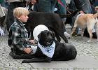 II Parada Labrador�w. Rekord Guinnessa pobity!