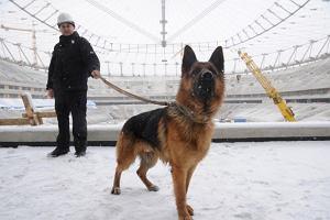 Policyjne psy trenują na Stadionie Narodowym [zdjęcia]