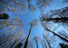 Radni chcą więcej lasu w Krakowie. Bo drzewa to naturalny filtr
