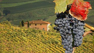 Toskania. Chianti. Między Sieną a Florencją rozciąga się kraina pagórków porosłych lasami, gajami oliwnymi i winoroślą, między którymi złocą się szerokie łany zboża i słoneczników. Maleńkie miasteczka pamiętające czasy Etrusków usadowiły się na szczytach i spoglądają na okolicę zza potężnych murów. To właśnie Chianti - kraina uznawana za jedną z najbardziej charakterystycznych części Toskanii, słynąca z pięknych krajobrazów i doskonałego wina.