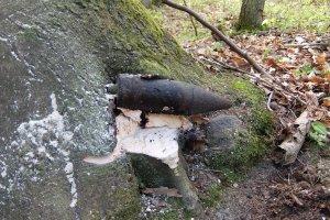 Bombowe znalezisko w lesie. Pocisk wr�s� w konar drzewa