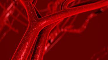 Naczynia krwionośne to tętnice, żyły i naczynia włosowate