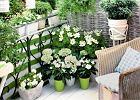 Funkcjonalne meble i inne sprytne rozwiązania idealne na mały balkon