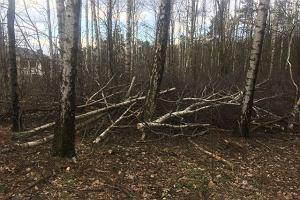 Kolejne wycinka drzew. Tym razem tną w lesie państwowym