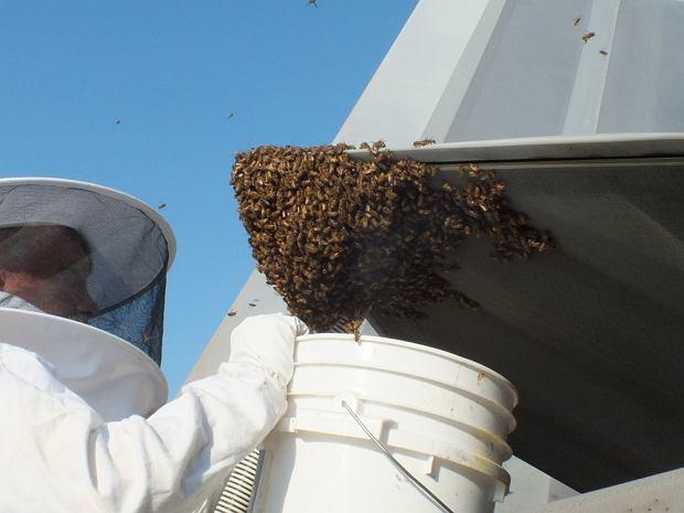 20 tys. pszczół uziemiło myśliwiec F-22 Raptor. Dowódca kazał ratować wszystkie