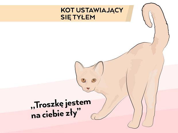Udomowione koty są zwykle towarzyskie i chętne do 'rozmowy'.  Ważne zatem, aby umieć odczytać ich język.