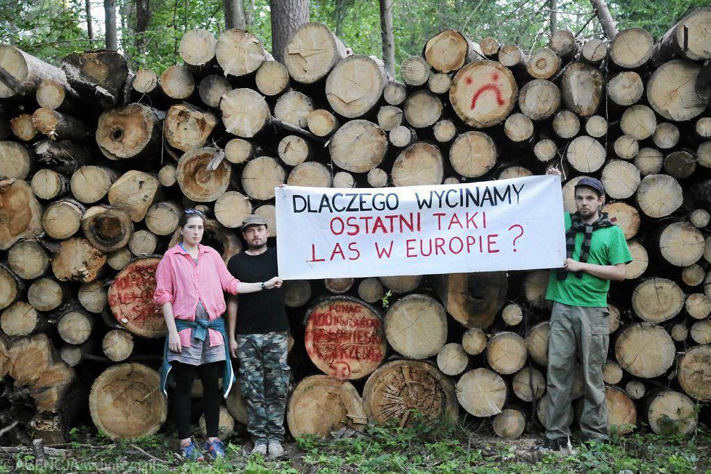 W Puszczy Białowieskiej od wielu tygodni stacjonuje Obóz dla Puszczy. Codziennie wyruszają z niego patrole. Obozowicze blokują maszyny do wycinki drzew
